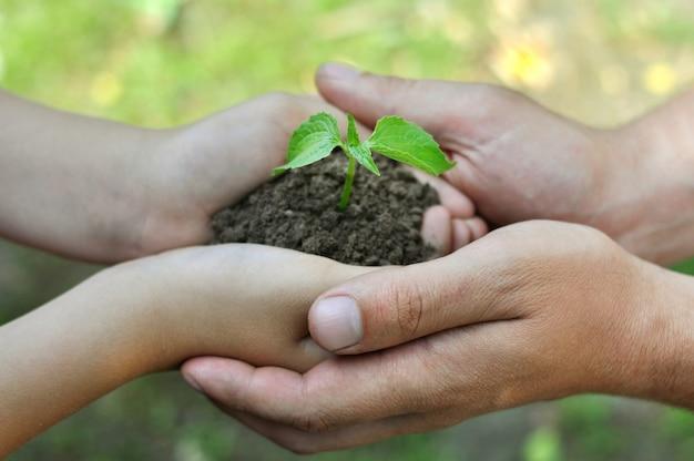 Die menschen halten einen in den boden gepflanzten sämling in den händen