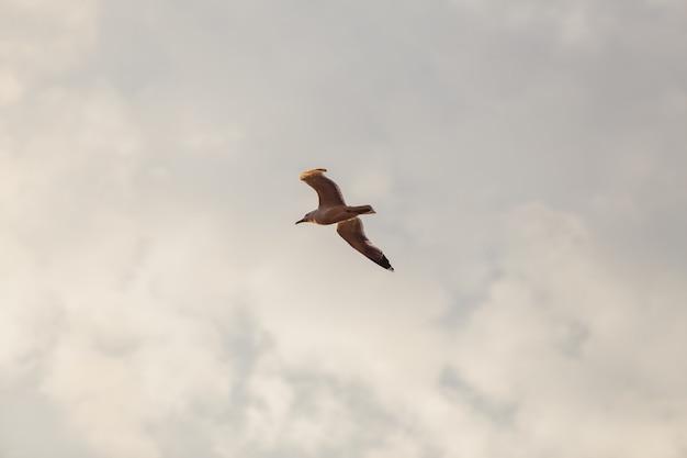 Die möwe fliegt in den himmel