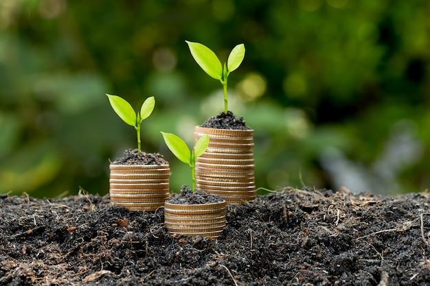 Die münzen werden auf dem boden gestapelt und die sämlinge wachsen darauf, das konzept, geld zu sparen und finanzielles und geschäftliches wachstum zu erzielen.