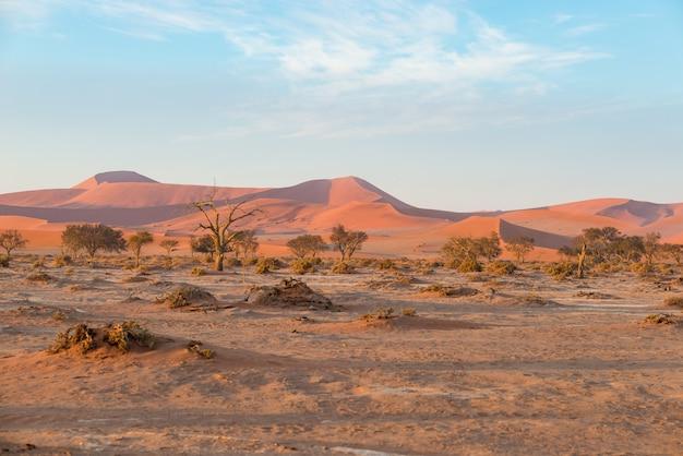Die namib wüste, roadtrip im wunderschönen namib naukluft national park, reiseziel in namibia, afrika.