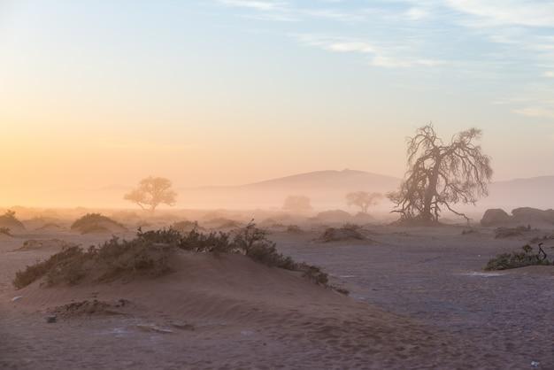 Die namib wüste, roadtrip im wunderschönen namib naukluft national park, reiseziel in namibia, afrika