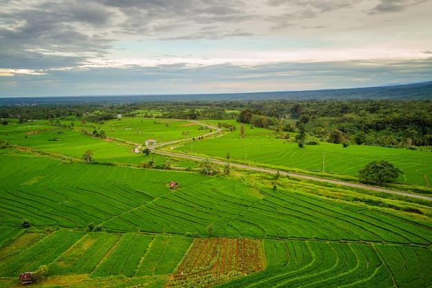 Die natürliche schönheit der weite der reisfelder mit der atmosphäre der blattdorfspur in nordbengkulu, indonesien