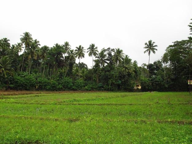 Die natur im zentrum von sri lanka