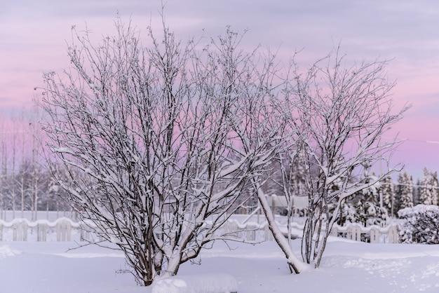 Die niederlassung des baums hat mit starken schneefällen und sonnenuntergang in der wintersaison am feriendorf kuukiuru, finnland bedeckt.
