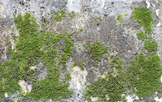 Die oberfläche der alten betonplatte mit moos oder algen bedeckt