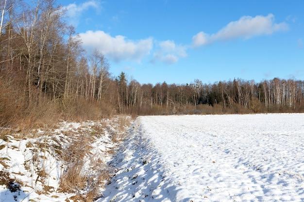 Die oberfläche des schnees auf dem feld. das foto wurde im winter mit geringer schärfentiefe aus der nähe aufgenommen. auf schnee sichtbare unebenheiten und löcher sowie pflanzen. blauer himmel im hintergrund