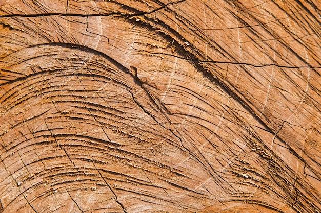 Die oberflächendetails des geschnittenen baumes