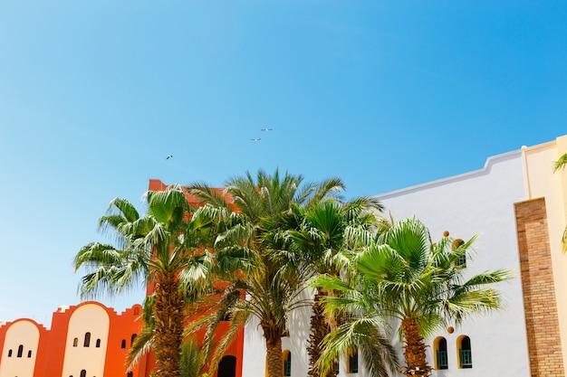 Die palmen in der nähe von hotelgebäuden