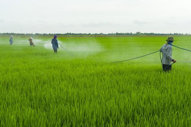 Die pestizide, landwirte, die schädlingsbekämpfungsmittel sprühen