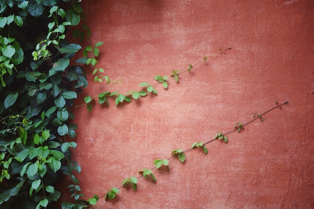 Die pflanze an der roten wand. weicher fokus mit weinleseartbild. hintergrundkonzept