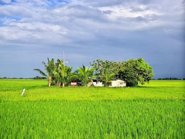 Die reisfelder in banaue philippinen