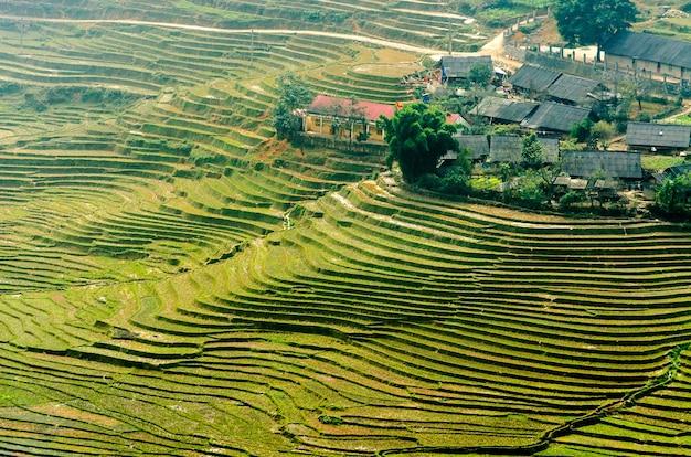 Die reisfeldterrasse in vietnam-land