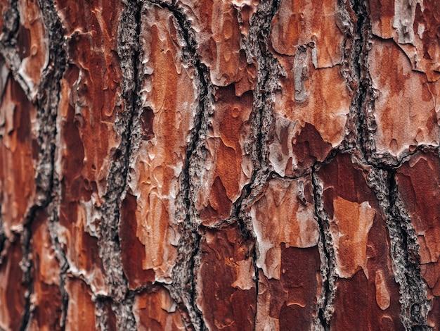 Die rinde des baumes. texturbild.