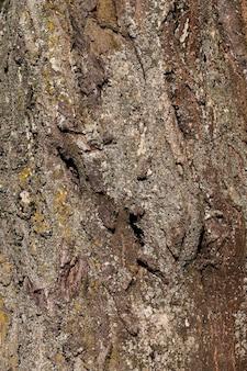 Die rinde eines baumes mit den merkmalen seiner struktur