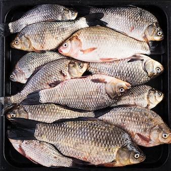 Die rohen karausche, lebender roher fisch, karausche aus nächster nähe. ansicht von oben, oben, textur