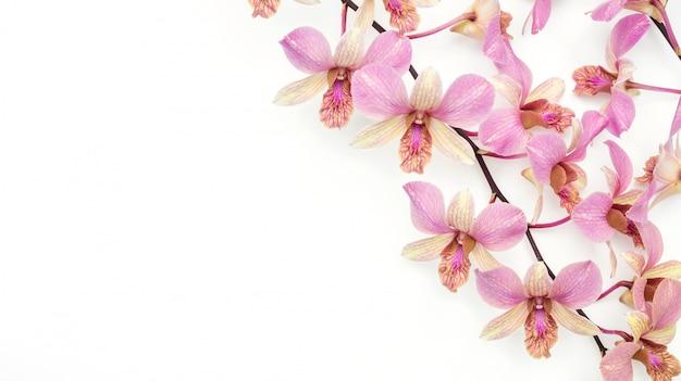 Die rosa orchideenblume auf einem weißen hintergrund.