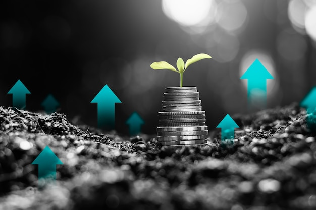 Die sämlinge wachsen auf den münzen und denken über finanzielles wachstum nach.