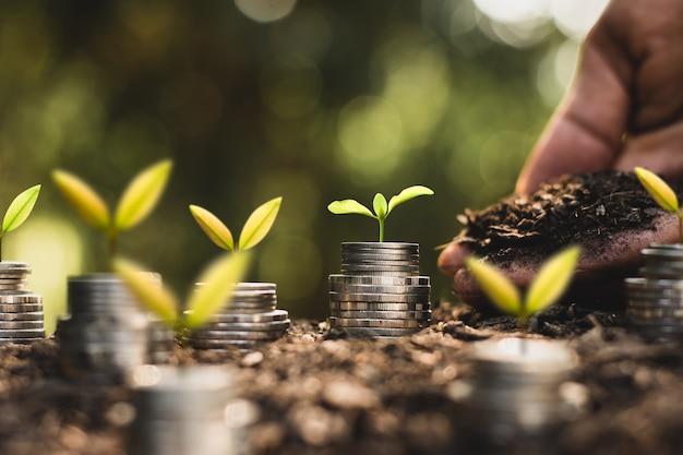 Die sämlinge wachsen auf vielen münzen und es gibt eine glühbirne in der nähe, die kreativität einsetzt, um geld zu verdienen.