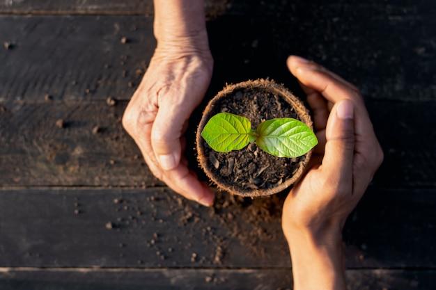 Die sämlinge wachsen in einem topf mit kokosnussblättern und die hände einer alten frau und eines mannes sind von harmonischen umweltkonzepten umgeben.