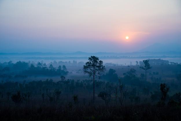 Die savanne von thailand.tung salang luang, diese wiese ist die einzige in thailand, die im morgengrauen tiere in der savanne hat