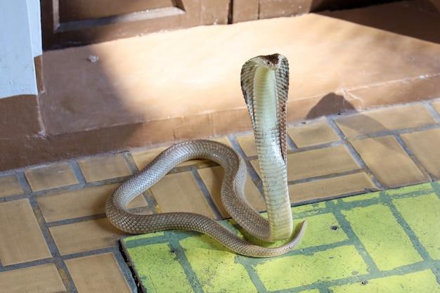 Die schlange auf textilboden