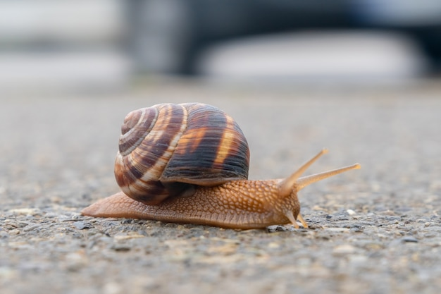 Die schnecke bewegt sich langsam auf dem asphalt