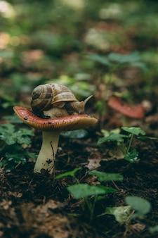 Die schnecke kriecht auf dem pilzhut, dem fliegenden natürlichen hintergrund. tapete, tierwelt, weichzeichner, toning.