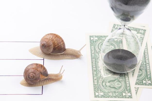 Die schnecken konkurrieren zuerst, um mit geld die ziellinie zu erreichen.