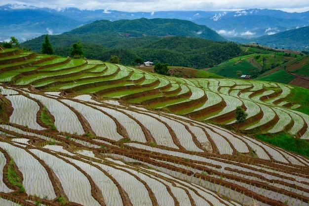 Die schöne landschaft der terrassierten reisfelder am pong pieng wald im norden thailands