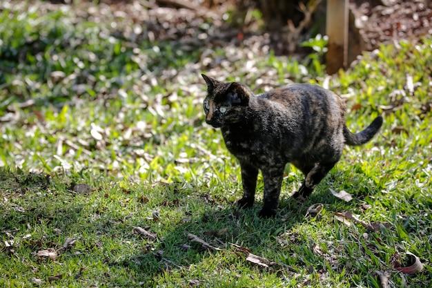 Die schuppige katze hat ein schwarz-orangefarbenes fell, daher kann sie auch als schildkrötenkatze bezeichnet werden