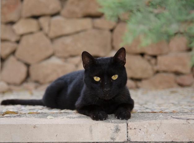 Die schwarze katze, die in die kamera schaut