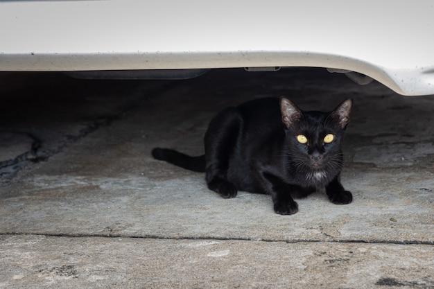 Die schwarze katze saß unter dem auto und wollte augenkontakt herstellen.