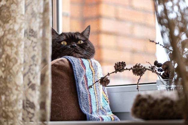 Die schwarze katze sitzt bequem in einem bett auf der fensterbank und sonnt sich in der sonne