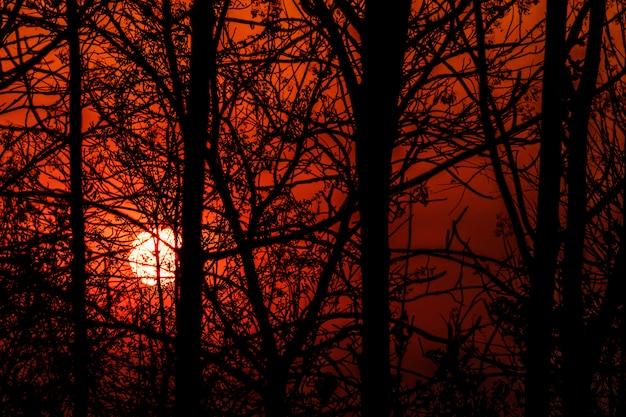 Die silhouette der zweige bei sonnenuntergang