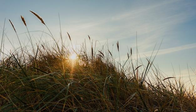 Die sonnenstrahlen scheinen bei sonnenuntergang durch das gras zwischen den sanddünen.