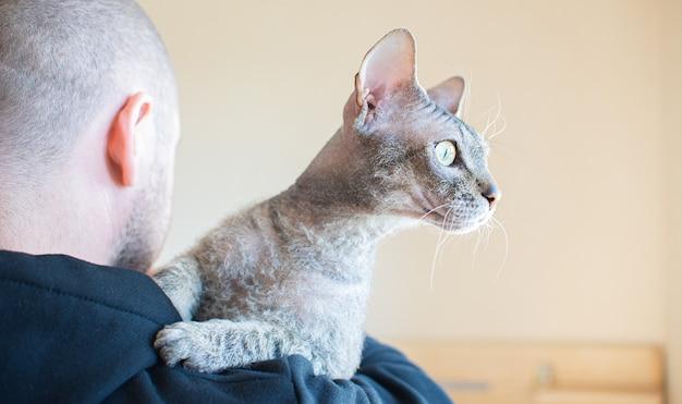Die sphinx-katze liegt zu hause auf der schulter eines mannes. platz kopieren.