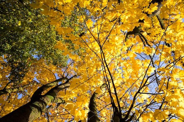 Die spitzen und die krone der bäume