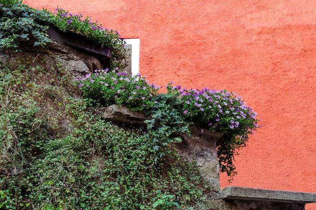 Die steinmauer ist mit lebenden pflanzen vor dem hintergrund eines roten hauses dekoriert.