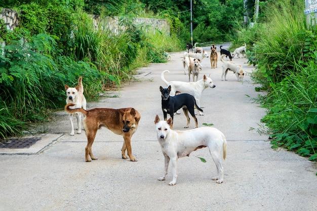 Die streunenden hunde warten auf nahrung von den menschen, die durch die wildnis gegangen sind