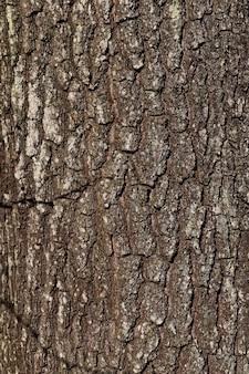 Die struktur der baumrinde, um das holz vor insekten und schädlingen zu schützen