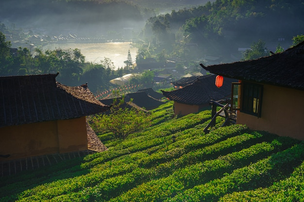 Die teeplantage auf natur das gebirgssonnenlicht und das aufflackernhintergrundkonzept in ban rak thai, mae hong son, thailand
