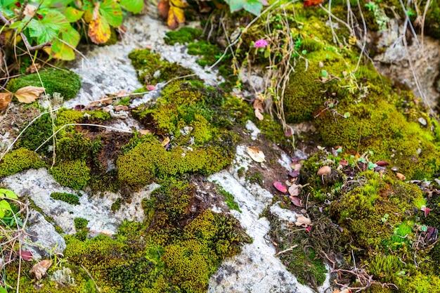 Die textur von grünem moos auf den steinen