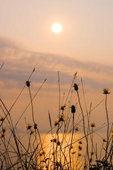 Die trockenblumen und trocken am abend sonnenuntergang