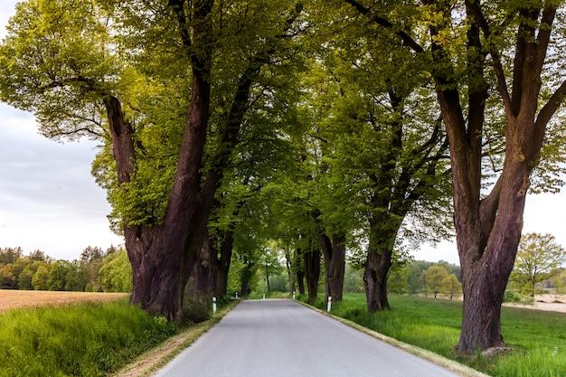 Die tschechische straße im hinterland unter bäumen