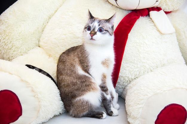 Die überraschte katze. die katze sieht überrascht aus.