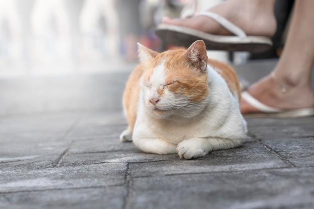 Die unerschütterliche katze schläft auf dem straßenpflaster zu füßen des besitzers