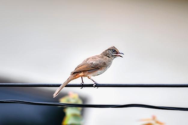 Die vögel, die an den stadtkabeln leben, sind morgens aktiv.