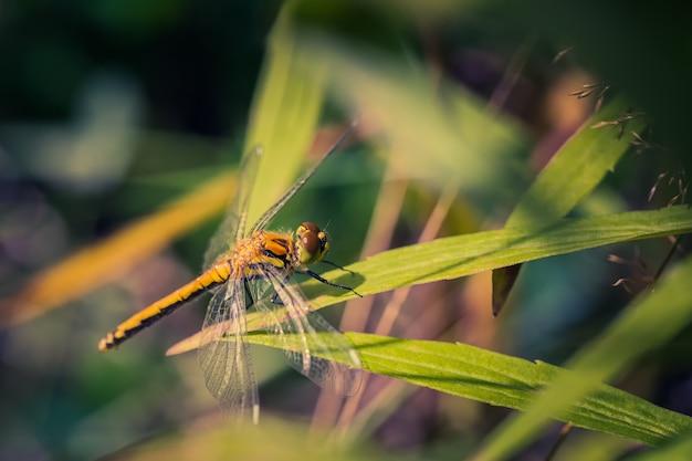 Die vom sonnenlicht beleuchtete libelle sitzt im gras