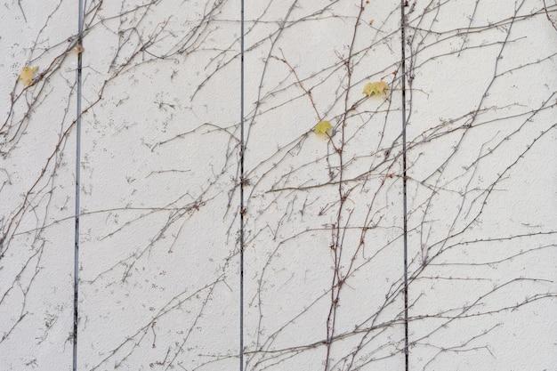Die wand besteht aus ziegeln und ist danach weiß gestrichen. es gibt schlingpflanzen an der linken wand.