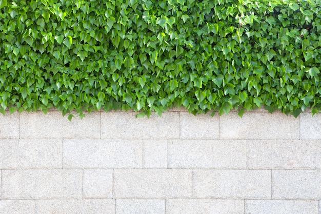 Die wand des hauses, das mit schönem grün bedeckt wird, verlässt anlagen